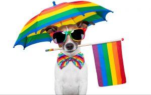 LGBTQ+ Lawyer Edmonton